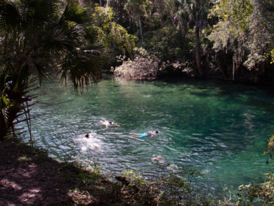 Swimming At Blue Spring
